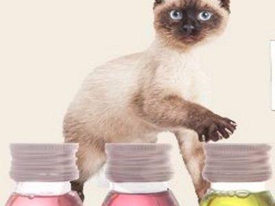 масла для кошек