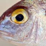 Самая популярная рыба в меню