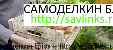 Выращивание овощей и фруктов с целью реализации