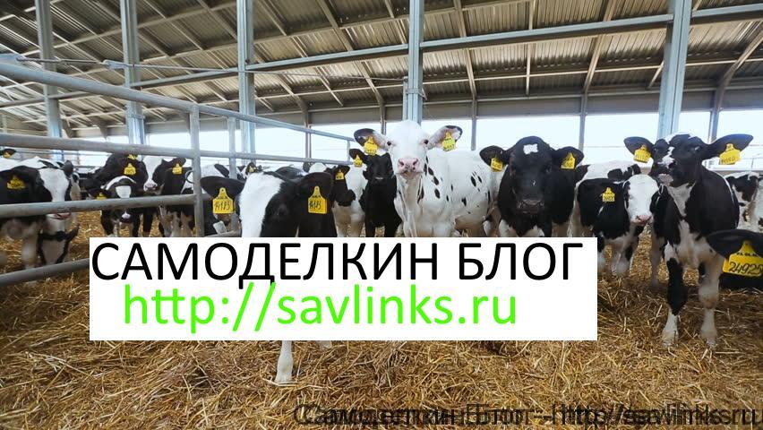 Разведение сельхоз животных