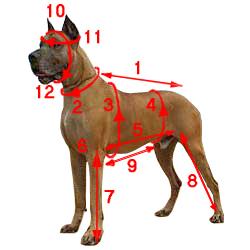 Одежда для собак Как снимать мерки